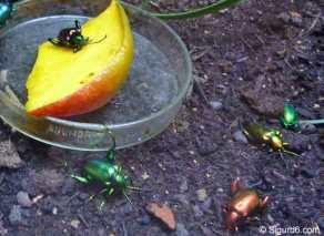 Insekten1