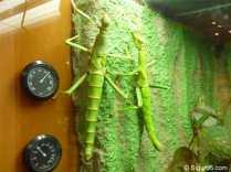 Insekten12
