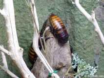 Insekten14