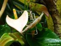 Insekten9
