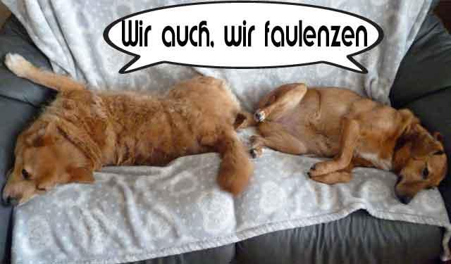 Hunde2.jpg