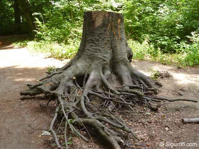 Wald4.jpg