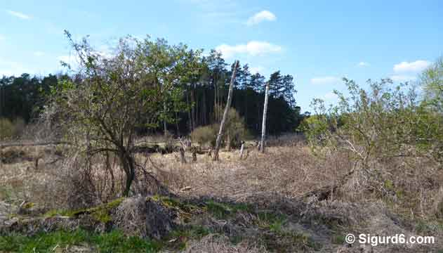 Hangelsberg1
